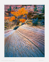 Cottonwood_Zion.jpg